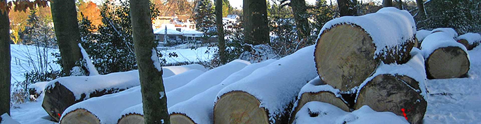 Holzcoop_Slider2_Aachener-Eiche-für-unsere-Werkstatt
